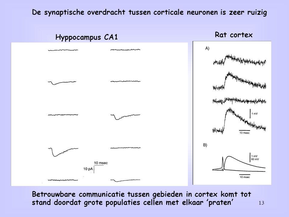De synaptische overdracht tussen corticale neuronen is zeer ruizig