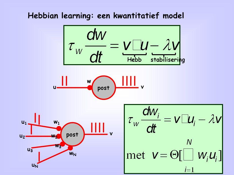 Hebbian learning: een kwantitatief model