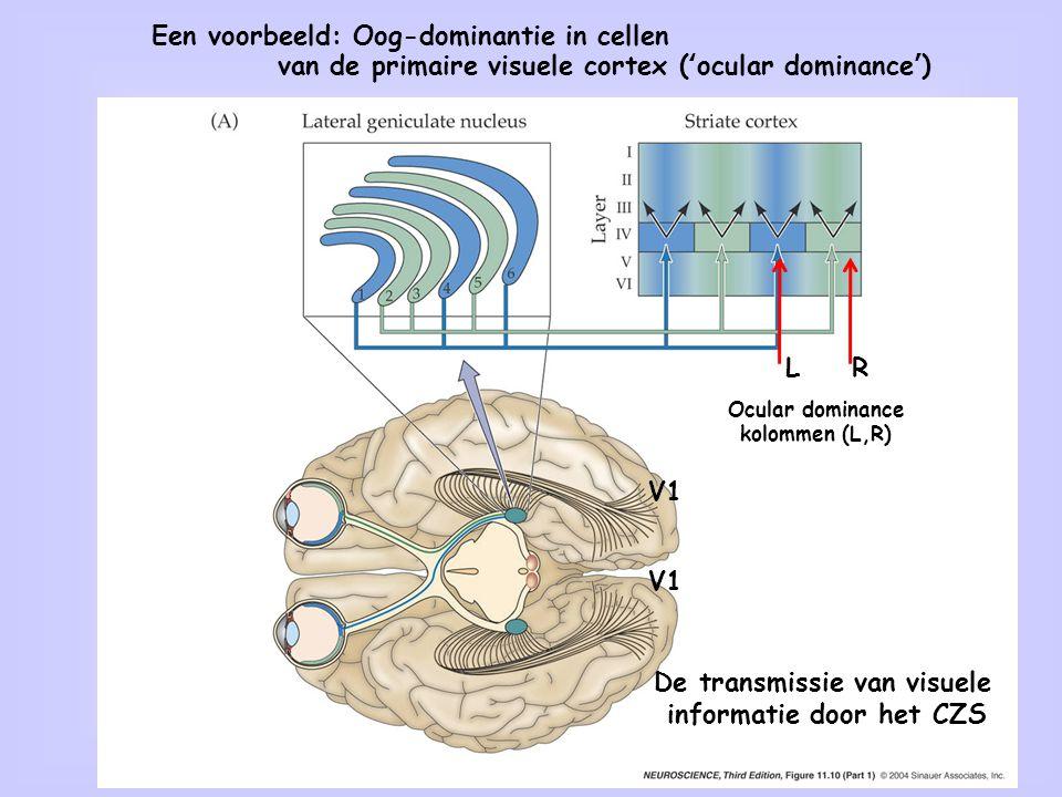 De transmissie van visuele informatie door het CZS