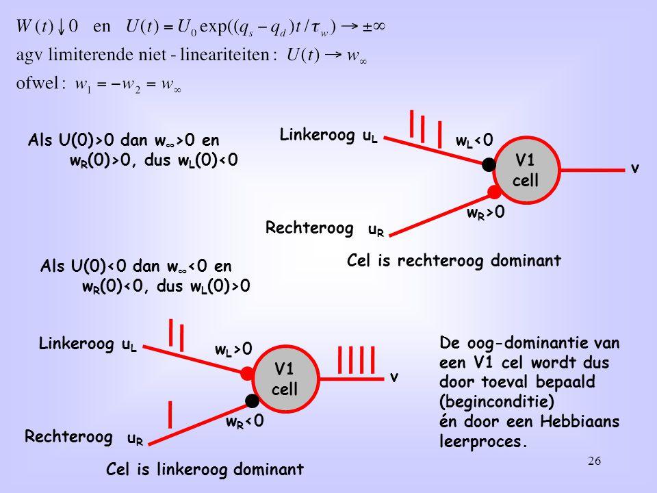 V1 cell uL. wL<0. v. uR. wR>0. Linkeroog. Rechteroog. Cel is rechteroog dominant. Als U(0)>0 dan w∞>0 en.