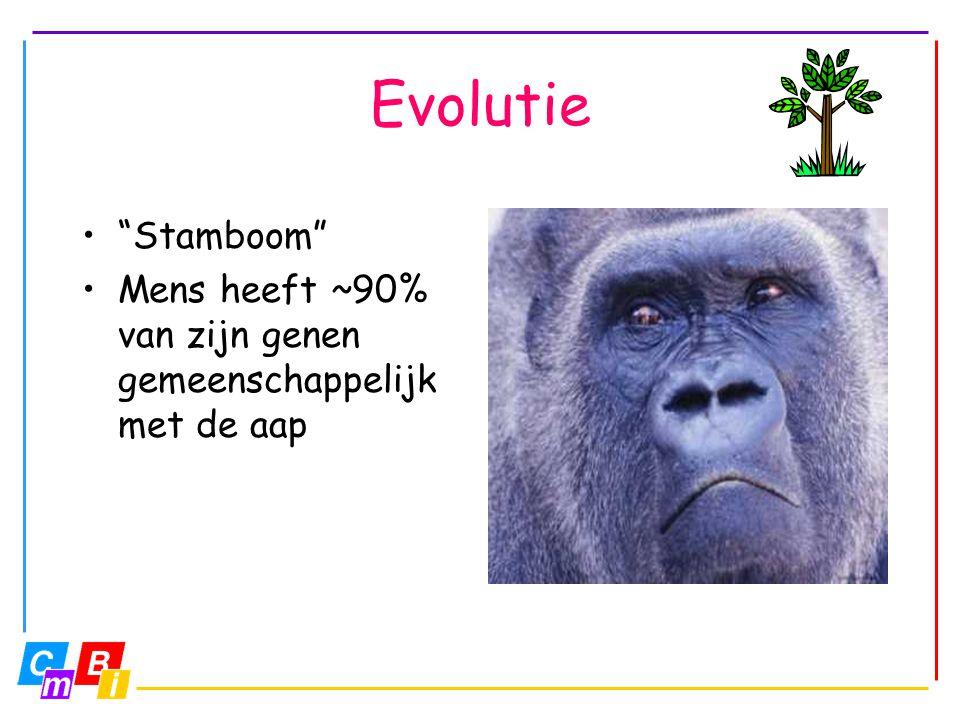 Evolutie Stamboom Mens heeft ~90% van zijn genen gemeenschappelijk met de aap