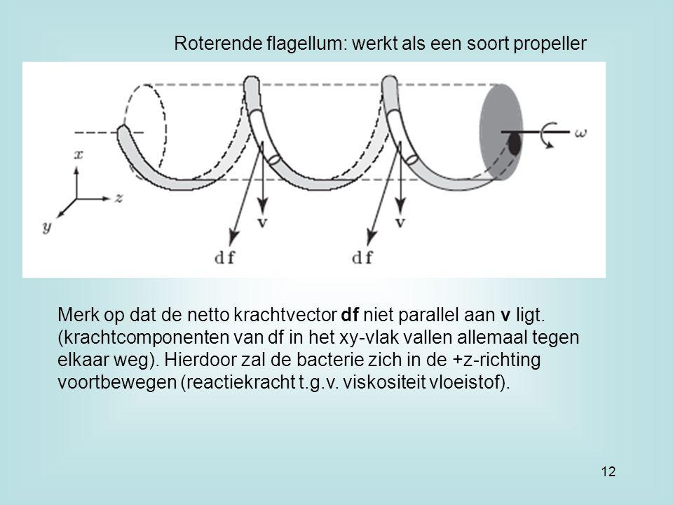 Roterende flagellum: werkt als een soort propeller