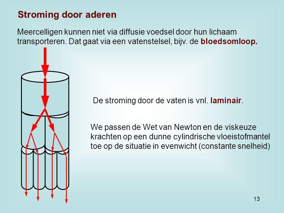 Stroming door aderen Meercelligen kunnen niet via diffusie voedsel door hun lichaam.