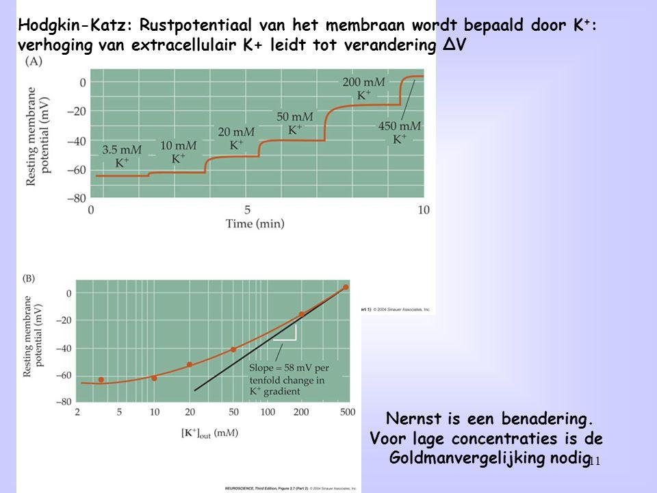 Hodgkin-Katz: Rustpotentiaal van het membraan wordt bepaald door K+: