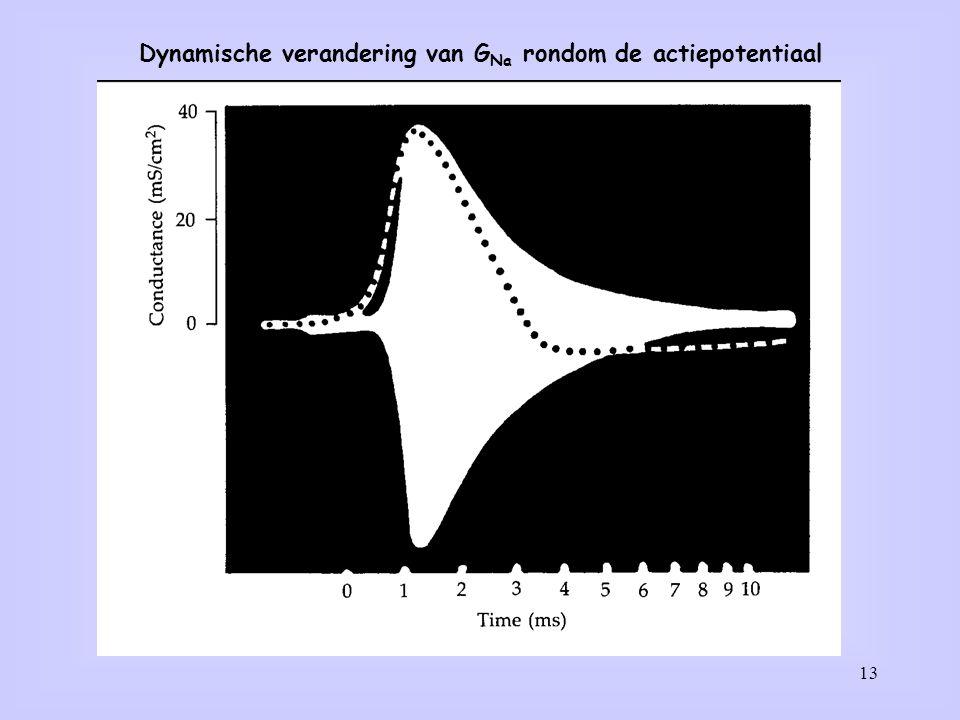Dynamische verandering van GNa rondom de actiepotentiaal