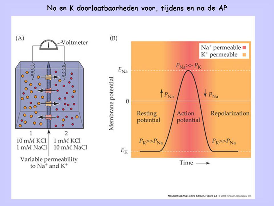 Na en K doorlaatbaarheden voor, tijdens en na de AP