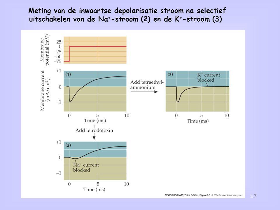 Meting van de inwaartse depolarisatie stroom na selectief