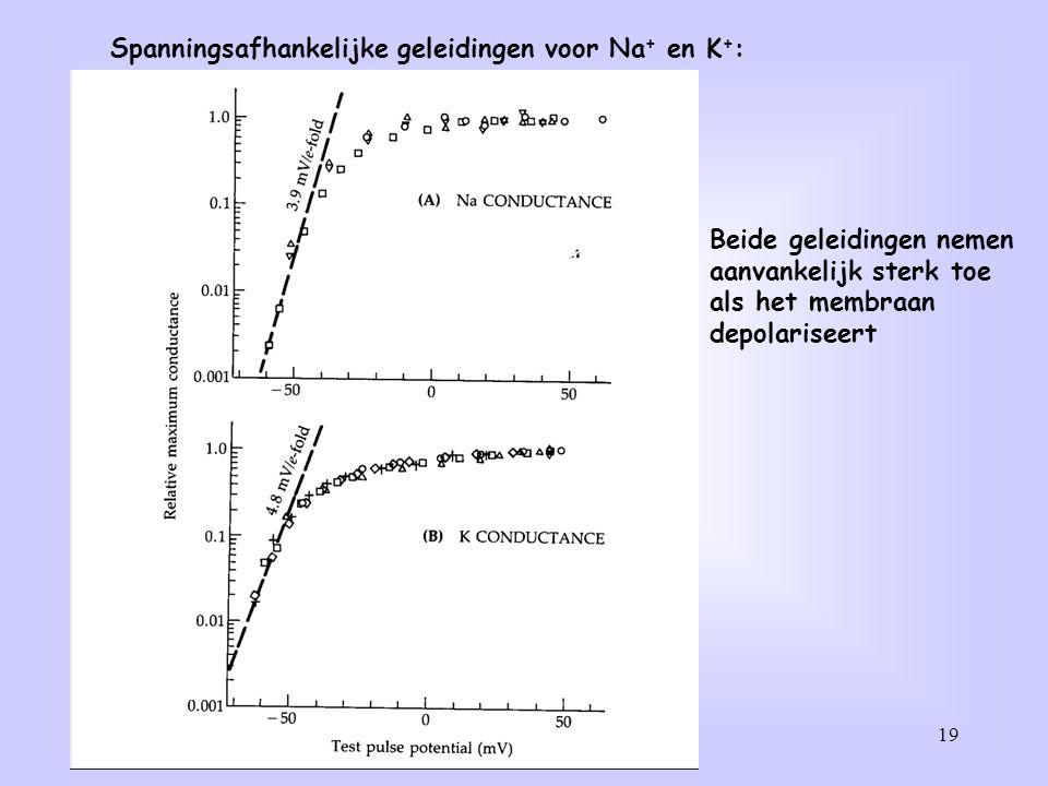 Spanningsafhankelijke geleidingen voor Na+ en K+:
