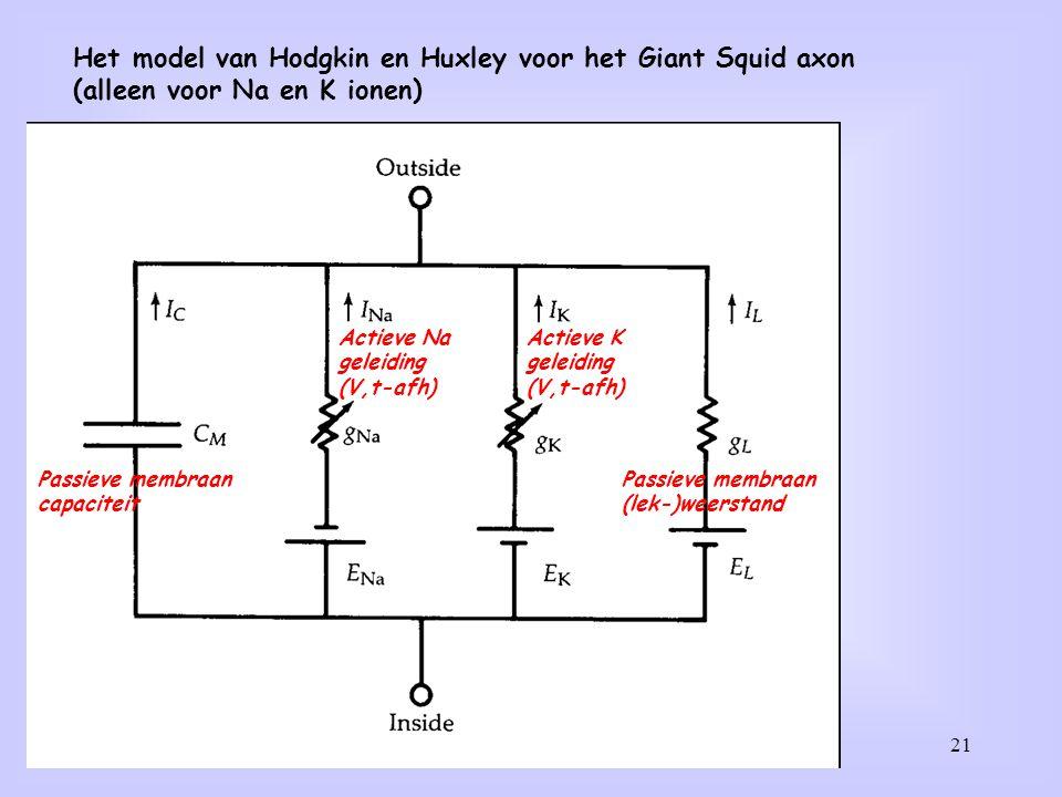 Het model van Hodgkin en Huxley voor het Giant Squid axon
