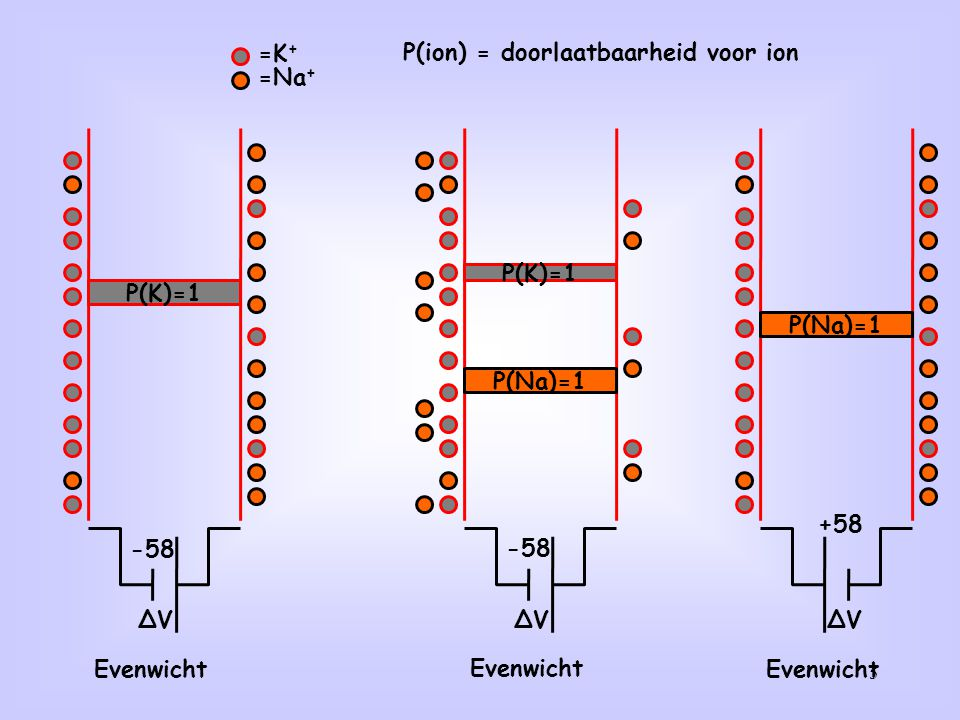 P(ion) = doorlaatbaarheid voor ion