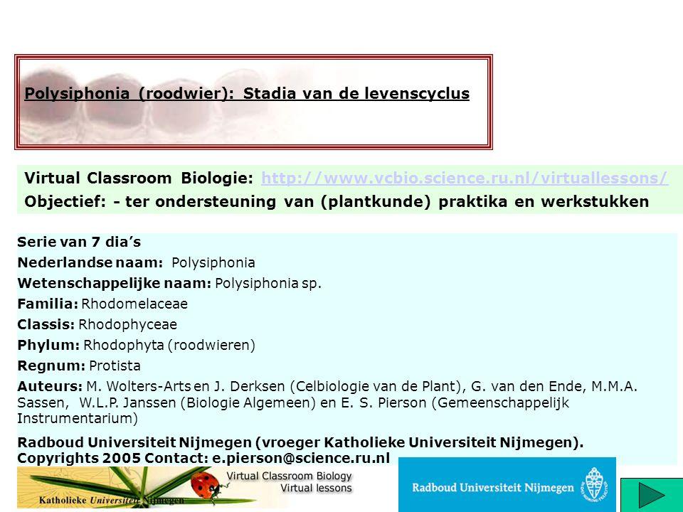 Polysiphonia (roodwier): Stadia van de levenscyclus