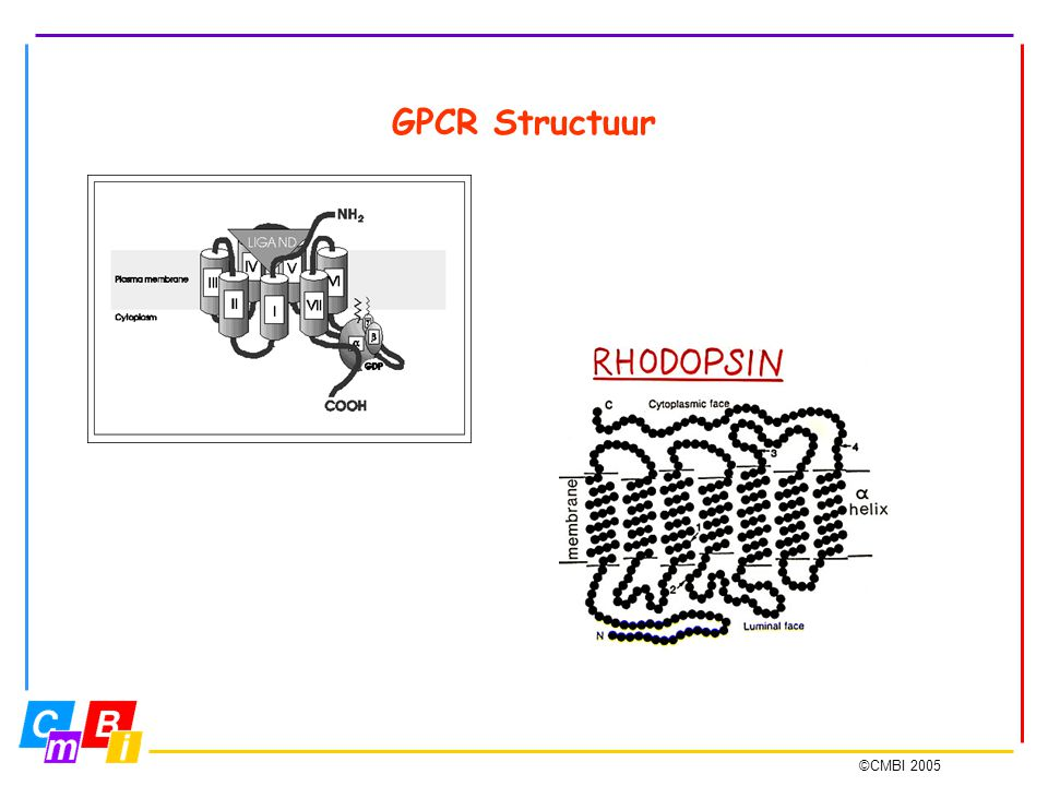 GPCR Structuur seven transmembrane regions