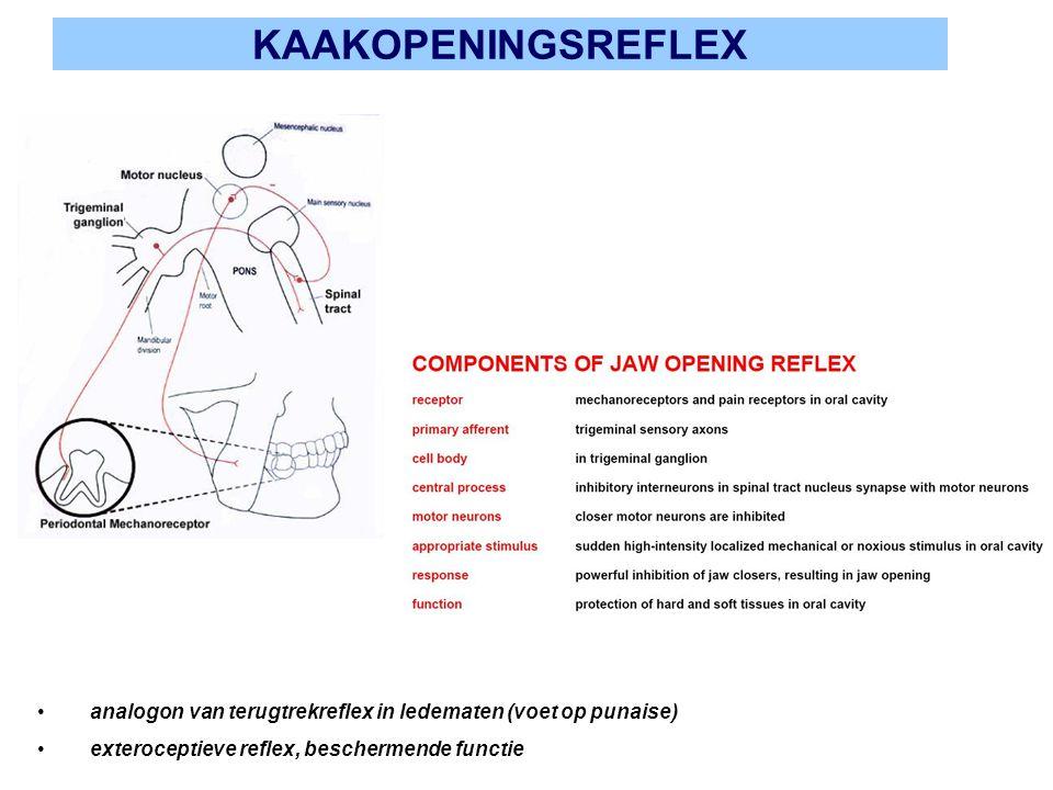 KAAKOPENINGSREFLEX analogon van terugtrekreflex in ledematen (voet op punaise) exteroceptieve reflex, beschermende functie.