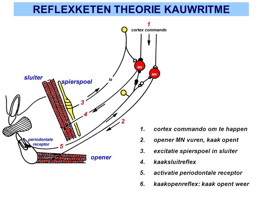 REFLEXKETEN THEORIE KAUWRITME