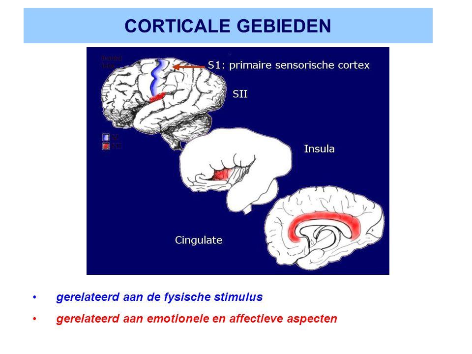 CORTICALE GEBIEDEN gerelateerd aan de fysische stimulus