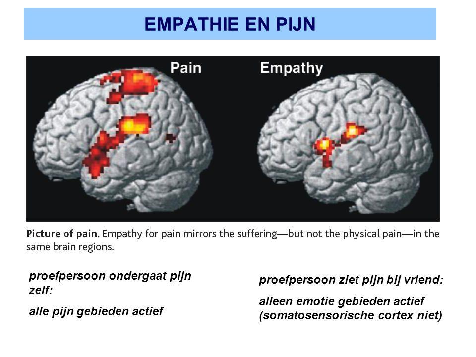 EMPATHIE EN PIJN proefpersoon ondergaat pijn zelf: