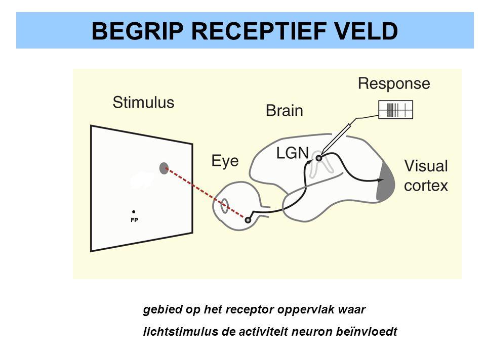 BEGRIP RECEPTIEF VELD gebied op het receptor oppervlak waar