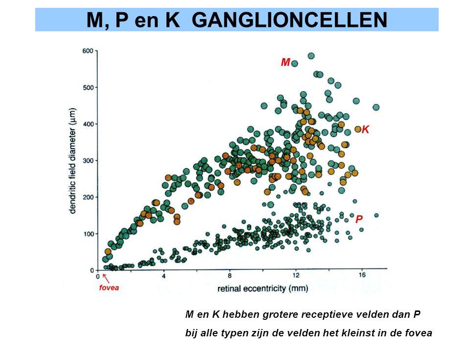 M, P en K GANGLIONCELLEN M en K hebben grotere receptieve velden dan P