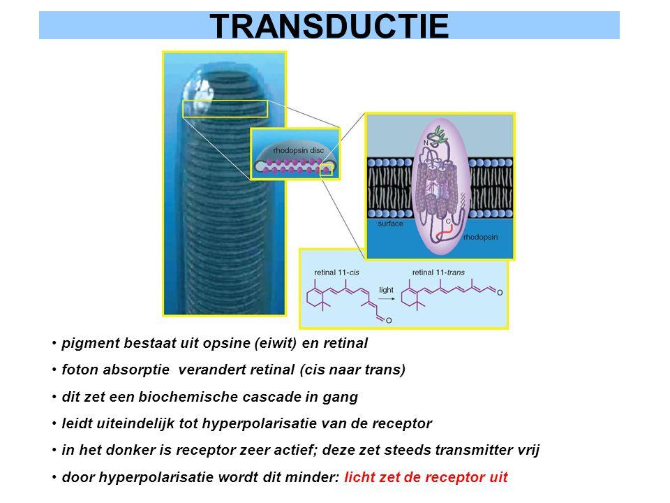 TRANSDUCTIE pigment bestaat uit opsine (eiwit) en retinal