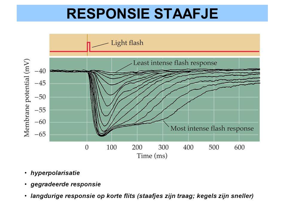 RESPONSIE STAAFJE hyperpolarisatie gegradeerde responsie