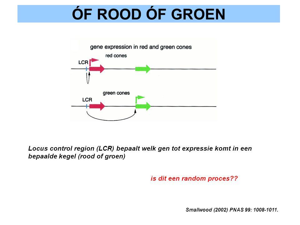 ÓF ROOD ÓF GROEN Locus control region (LCR) bepaalt welk gen tot expressie komt in een bepaalde kegel (rood of groen)