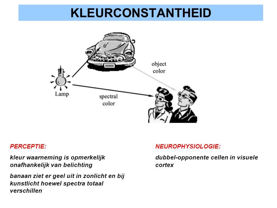 KLEURCONSTANTHEID PERCEPTIE: