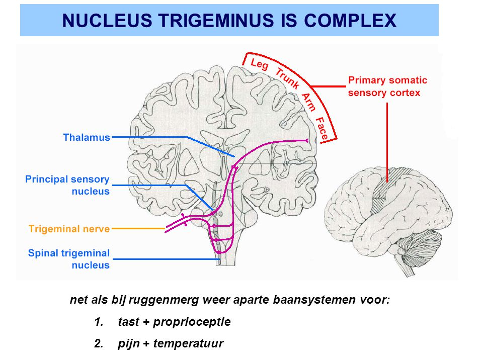 NUCLEUS TRIGEMINUS IS COMPLEX