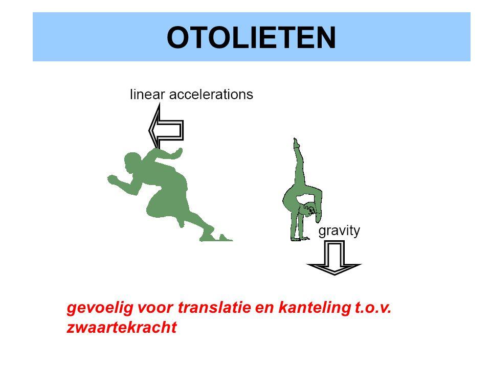 OTOLIETEN gevoelig voor translatie en kanteling t.o.v. zwaartekracht