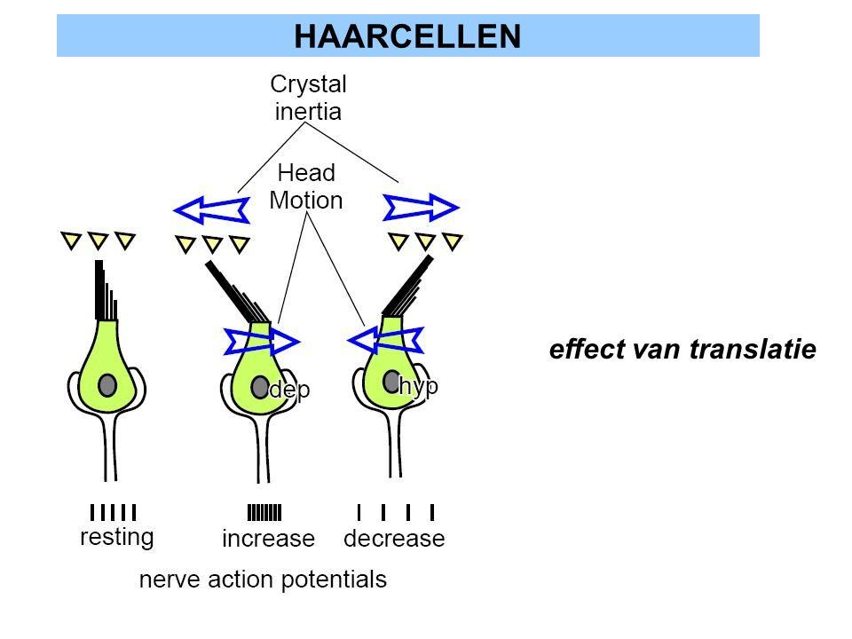 HAARCELLEN effect van translatie