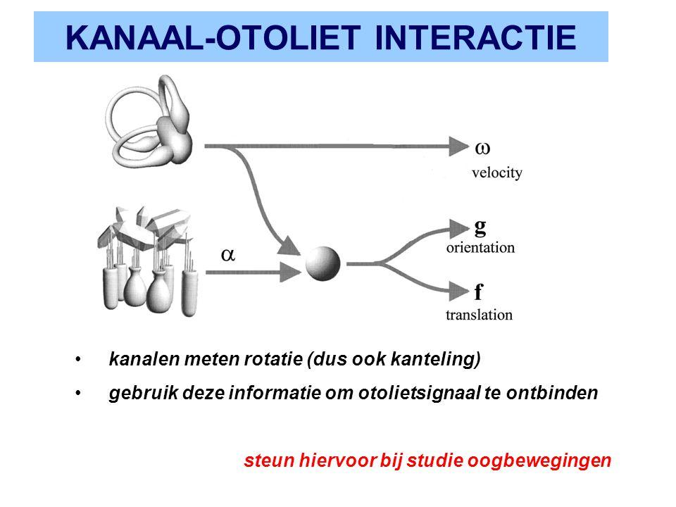 KANAAL-OTOLIET INTERACTIE