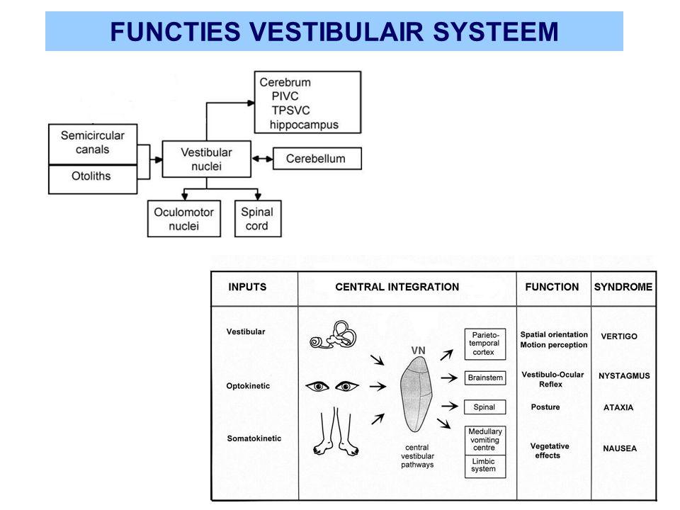 FUNCTIES VESTIBULAIR SYSTEEM