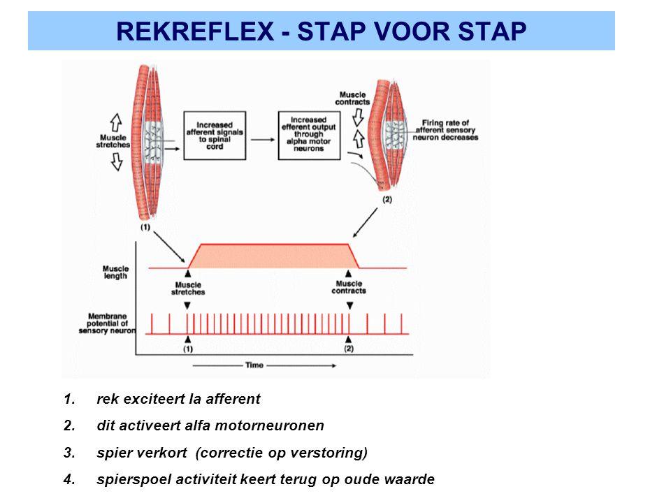 REKREFLEX - STAP VOOR STAP