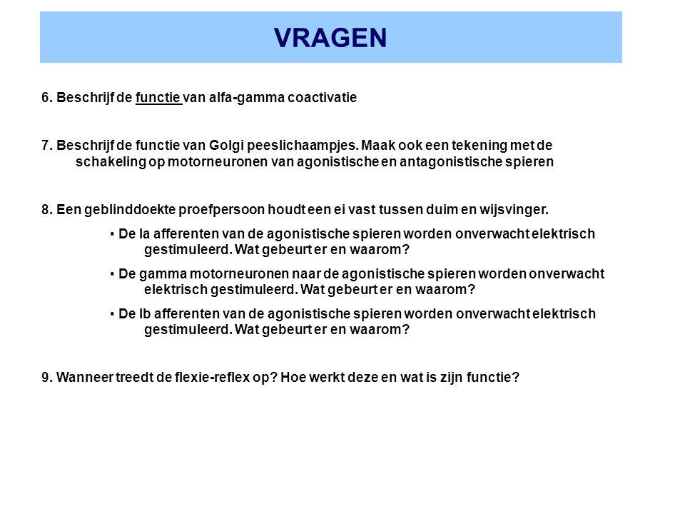 VRAGEN 6. Beschrijf de functie van alfa-gamma coactivatie