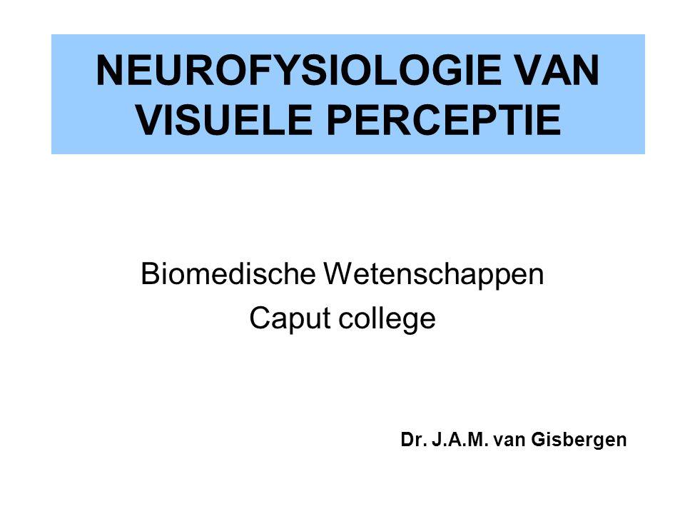 NEUROFYSIOLOGIE VAN VISUELE PERCEPTIE
