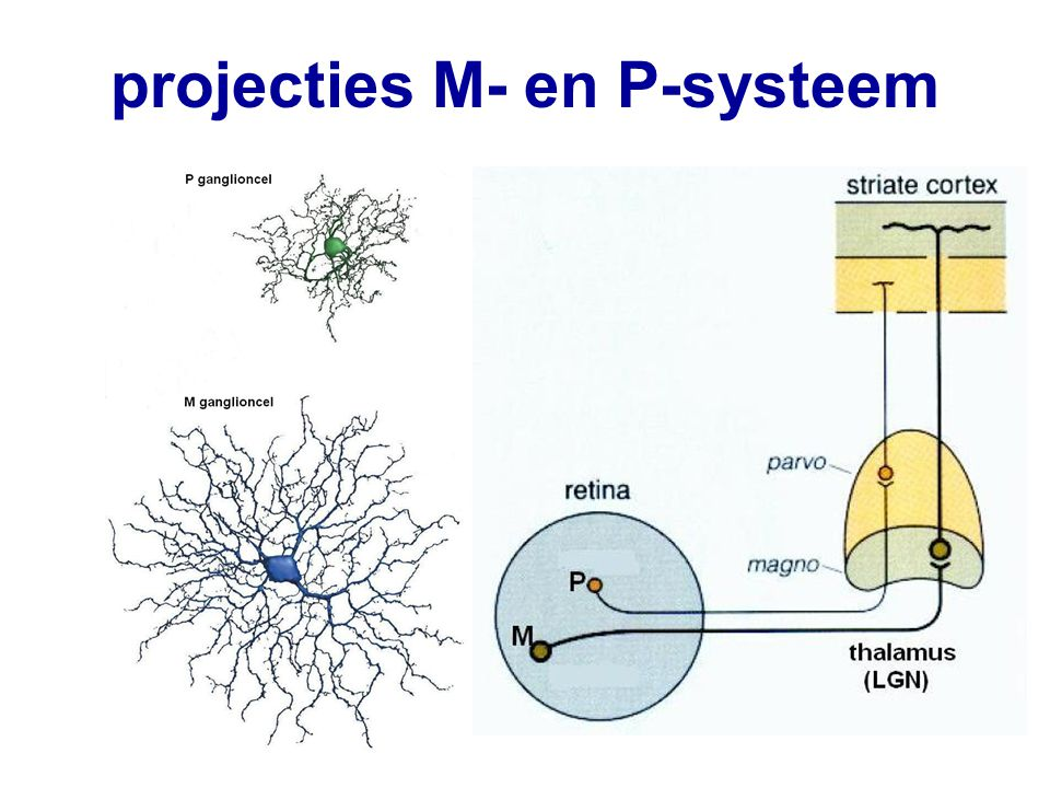 projecties M- en P-systeem