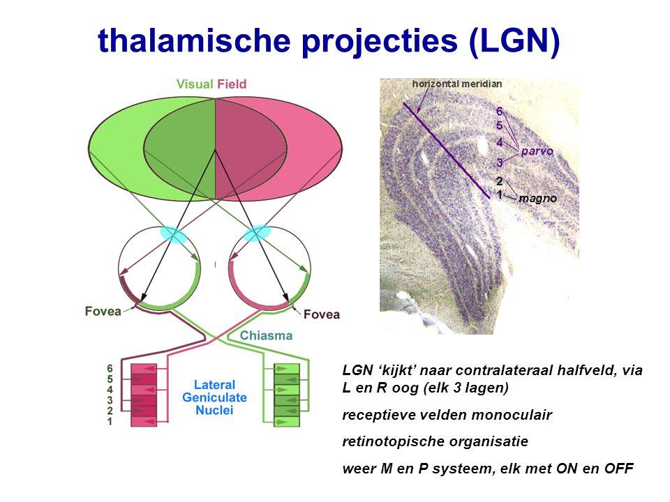 thalamische projecties (LGN)