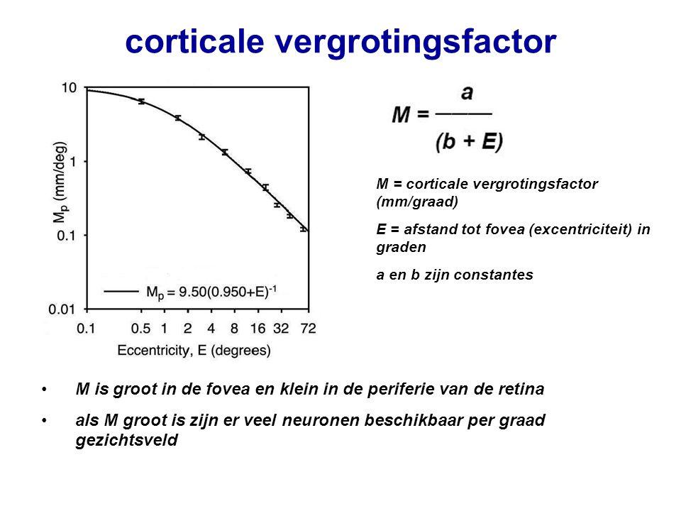 corticale vergrotingsfactor