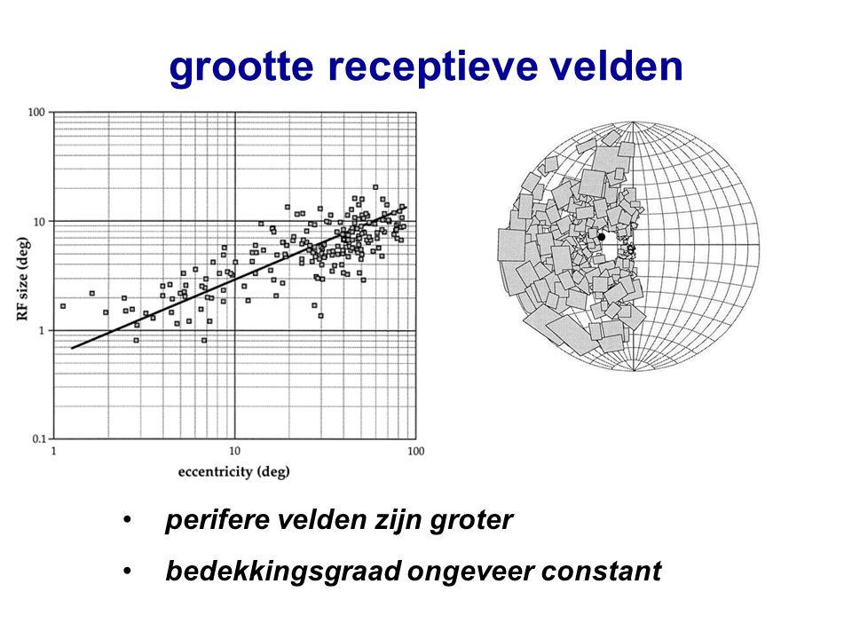 grootte receptieve velden