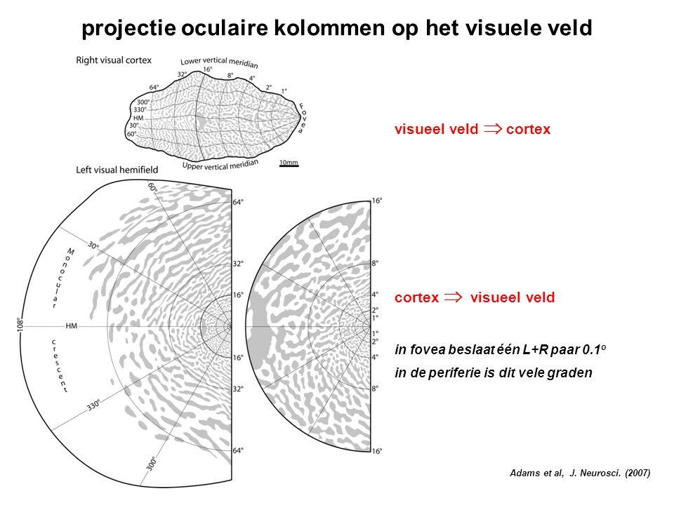 projectie oculaire kolommen op het visuele veld