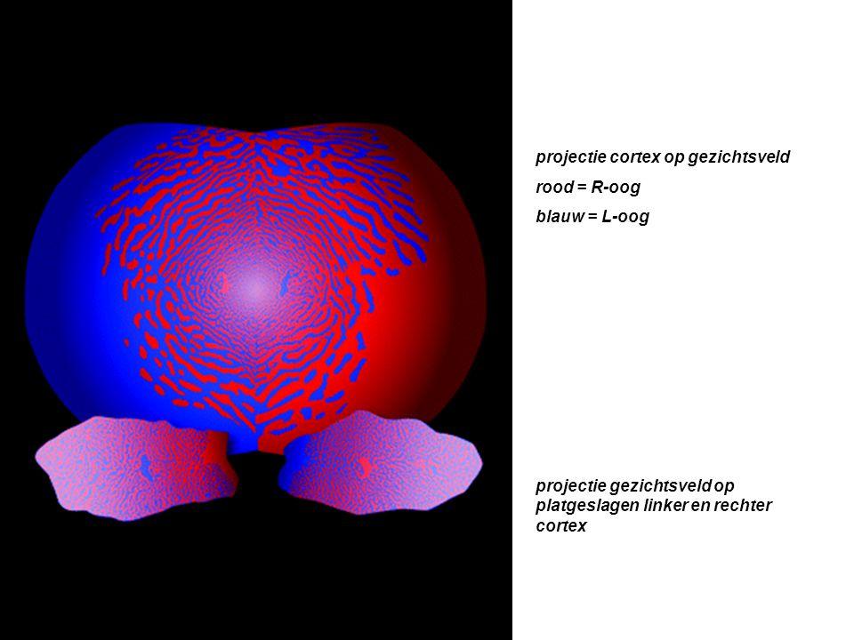 projectie cortex op gezichtsveld