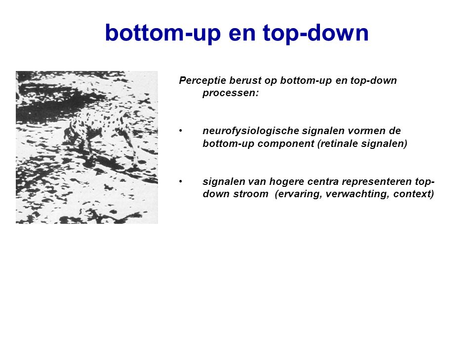 bottom-up en top-down Perceptie berust op bottom-up en top-down processen: