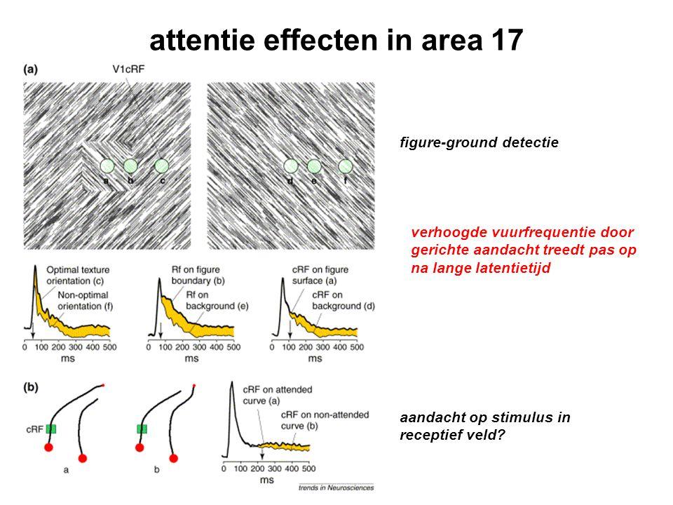 attentie effecten in area 17