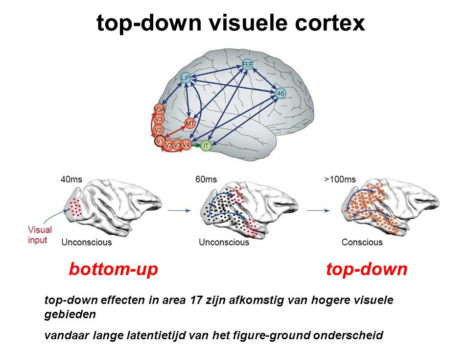 top-down visuele cortex