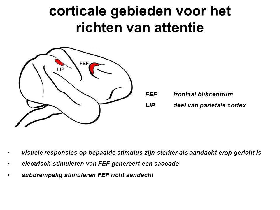 corticale gebieden voor het richten van attentie