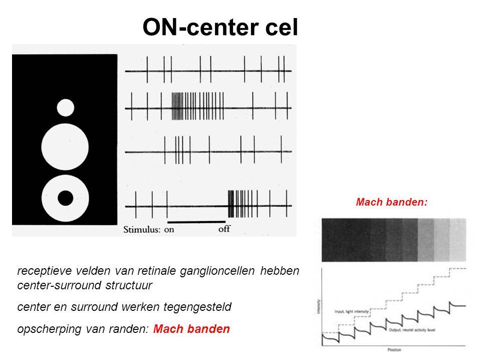 ON-center cel Mach banden: receptieve velden van retinale ganglioncellen hebben center-surround structuur.