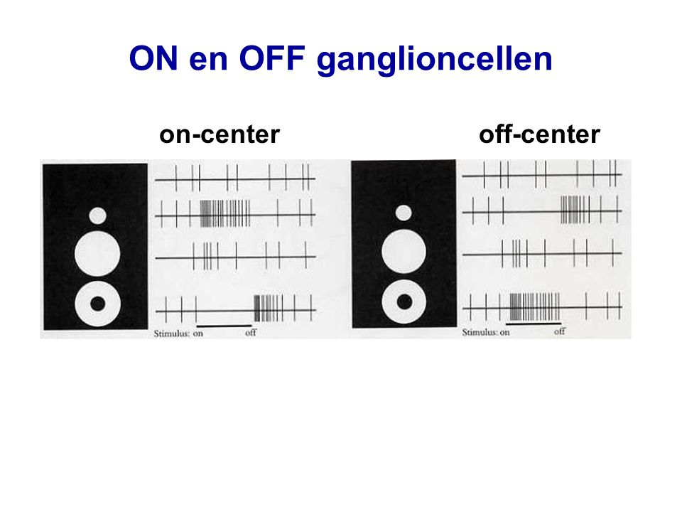 ON en OFF ganglioncellen