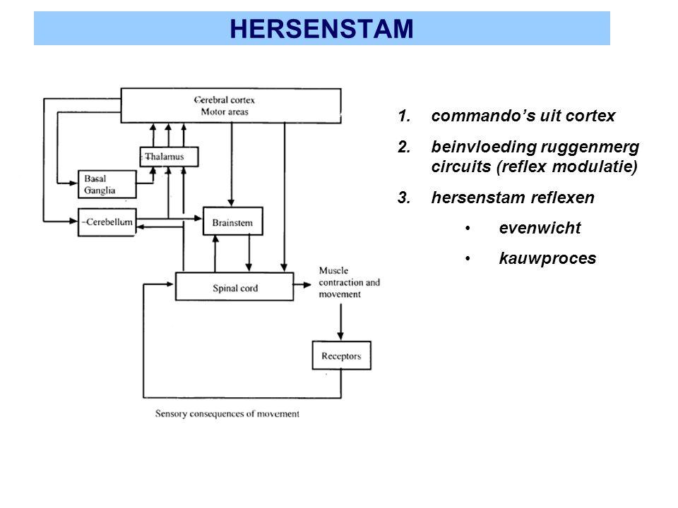 HERSENSTAM commando's uit cortex