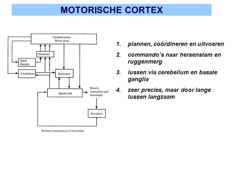 MOTORISCHE CORTEX plannen, coördineren en uitvoeren