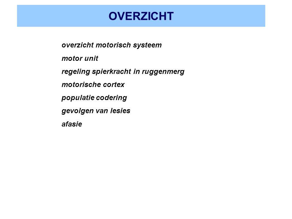 OVERZICHT overzicht motorisch systeem motor unit