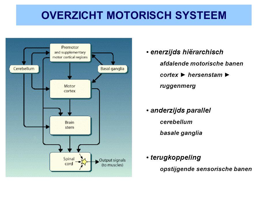 OVERZICHT MOTORISCH SYSTEEM